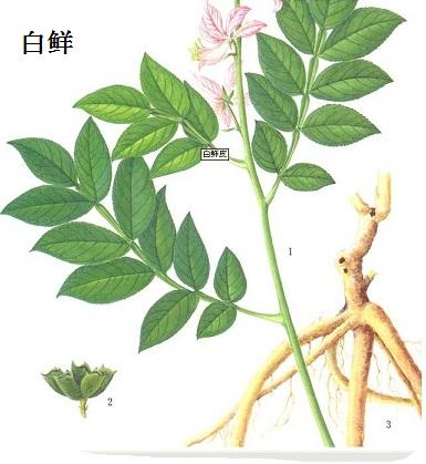 竹叶草脂_白鲜碱 | 484-29-7
