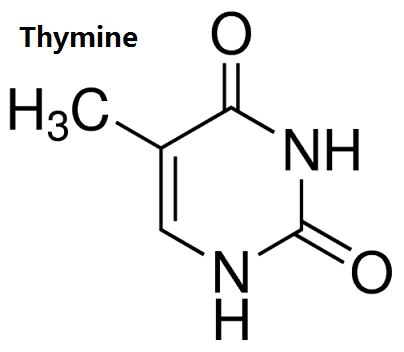 structure of thymine