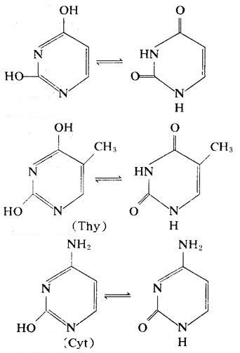 核酸 塩基
