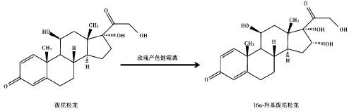 生物合成法制备 16α-羟基泼尼松龙