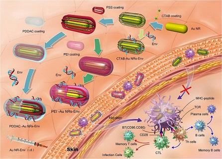 免疫刺激复合物