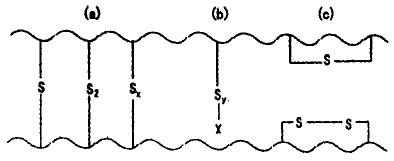 硫黄硫化交联键结构图