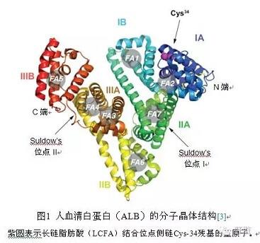 「白蛋白結構」的圖片搜尋結果
