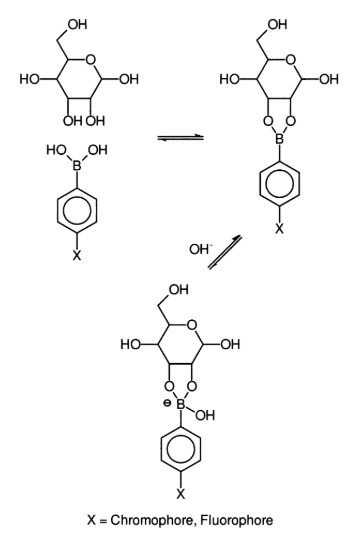 Reaction of Phenylboronic acid with a sugar