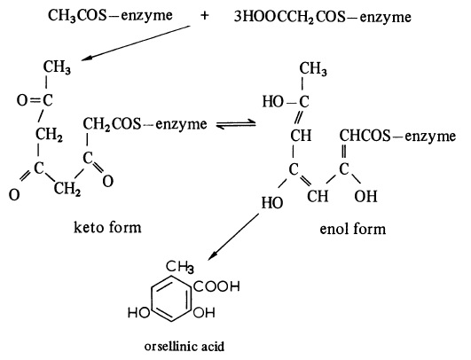 The biosynthesis of orsellinic acid