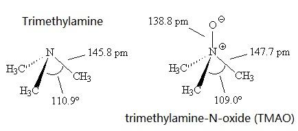 Trimethylamine and trimethylamine-N-oxide (TMAO)