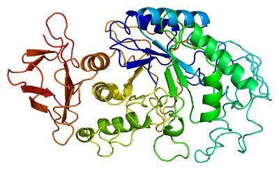 alpha-淀粉酶