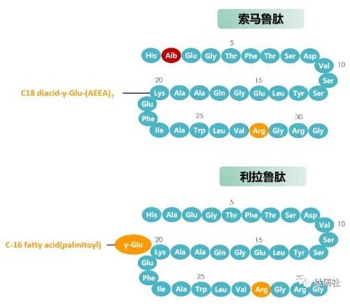 索马鲁肽和利拉鲁肽分子结构