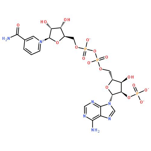 氧化型辅酶Ⅱ自由酸