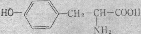 酪氨酸 结构式