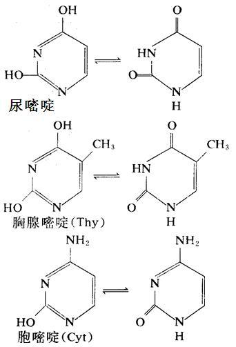 核酸中重要的嘧啶衍生物:尿嘧啶、胸腺嘧啶、胞嘧啶