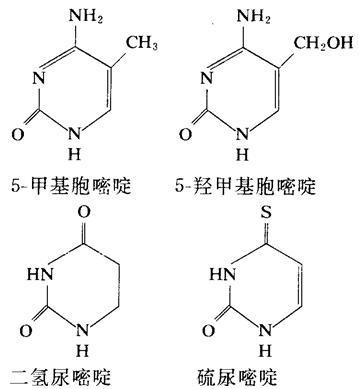 二氢尿嘧啶、硫脲嘧啶、5-甲基胞嘧啶