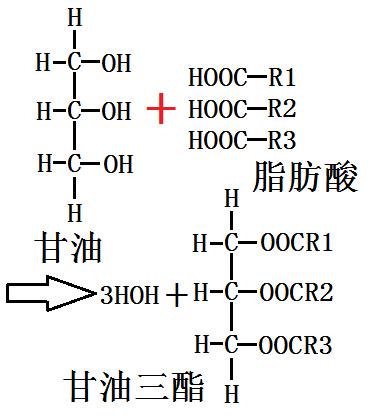 甘油的酯化图