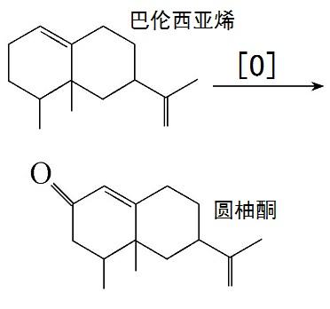 巴伦西亚烯制备圆柚酮的化学反应路线图