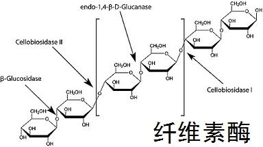 纤维素酶 分子结构式