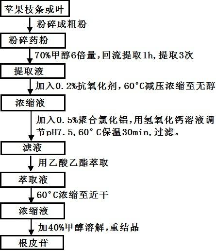 根皮苷提取的工艺流程