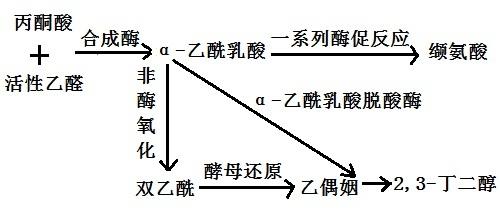 α-乙酰乳酸脱羧酶的作用机理图