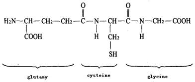 Glutathione (GSH) chemical structural formula