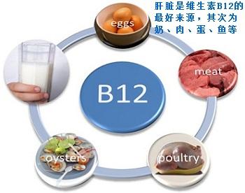 维生素B12的来源