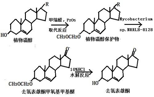 微生物发酵法生产 DHEA 反应流程图