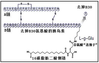 德谷胰岛素的结构