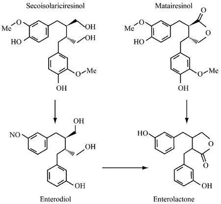 亚麻木酚素药代动力学