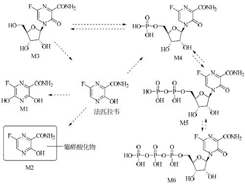 法匹拉韦的代谢途径