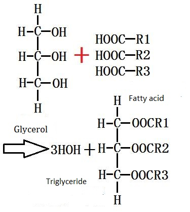 the esterification of glycerol