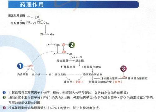 醋酸去氨加压素的药理作用