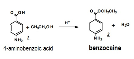 the synthesis of benzocaine