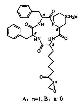α-氨基脂肪酸成环环状脂肽分子结构
