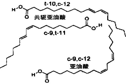 亚油酸和两种主要共轭亚油酸图