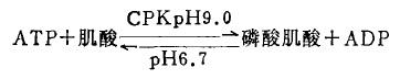 合成磷酸肌酸的一种反应式